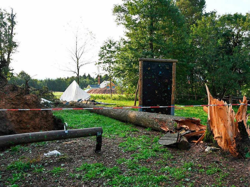 Großeinsatz bei Rickenbach: In einem Z...unge von einem Baum erschlagen worden.  | Foto: dpa