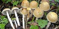 Den Pilzen auf der Spur