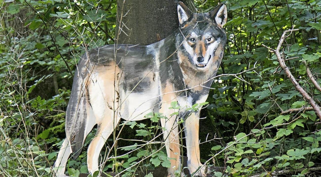 Mit Sicherheit wird niemand einen Wolf...für staunende Augen bei den Besuchern.  | Foto: Peter Rosa