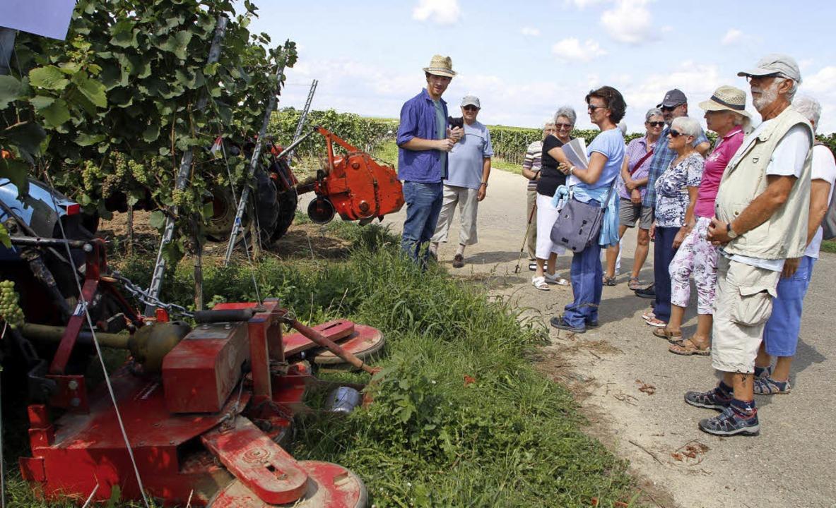 Was die Arbeit in den Reben früher sch...(links) den Weinwanderern am Sonntag.   | Foto: Heidi Fössel