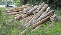 Holz in Weil am Rhein in der Quarantänezone gelagert