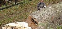 Neue Forstbibel bis 2026 in Kraft