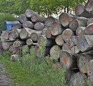 Holzhändler hat wissentlich die Quarantänevorschriften missachtet