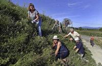 Die Nabu-Wildbienenschützer zeigen blühenden Einsatz