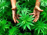 17-Jährige will mehr als 100 Gramm Marihuana in der Tram nach Weil am Rhein schmuggeln
