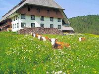 Erst Kühe, dann Hüpfburg