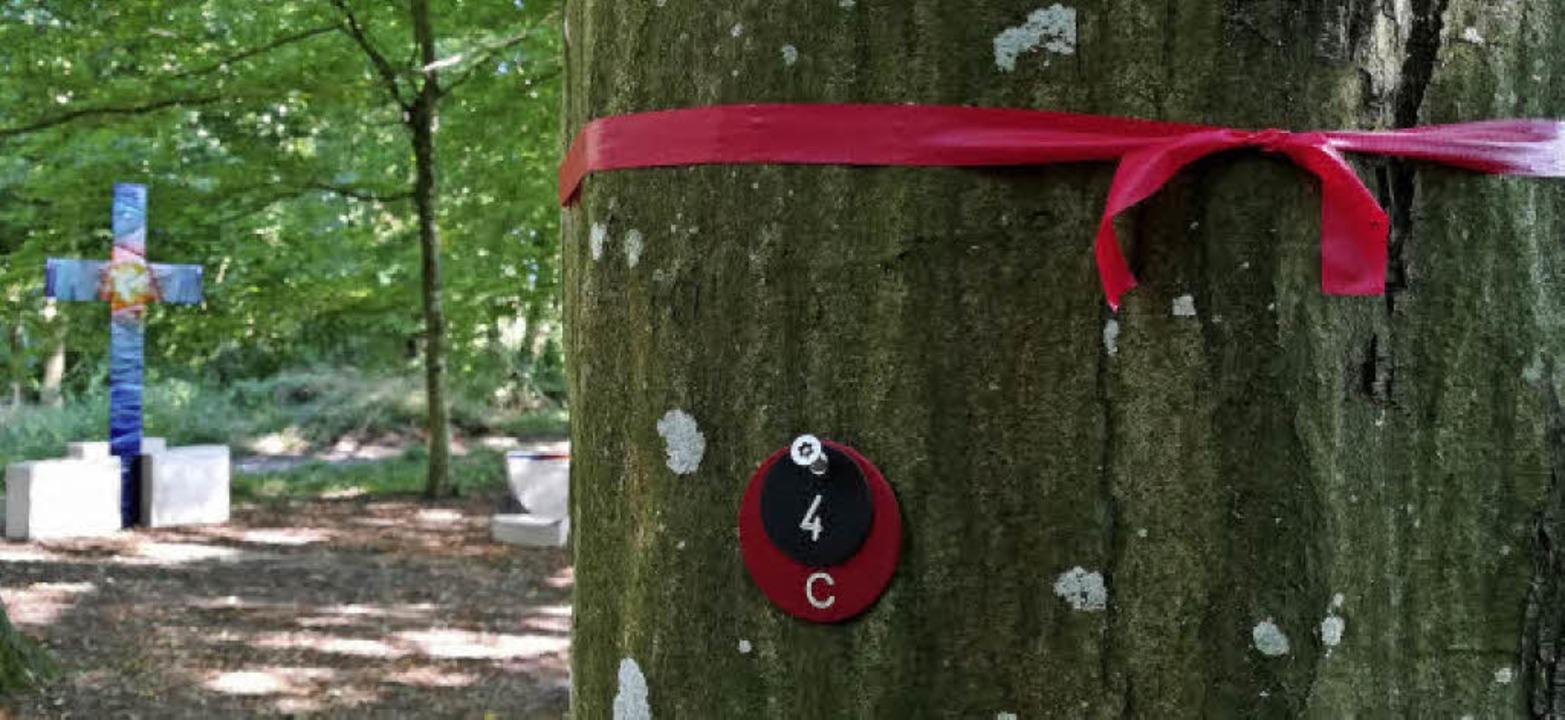 Ein zur Bestattung gekennzeichneter Baum  | Foto: Ulrike Derndinger