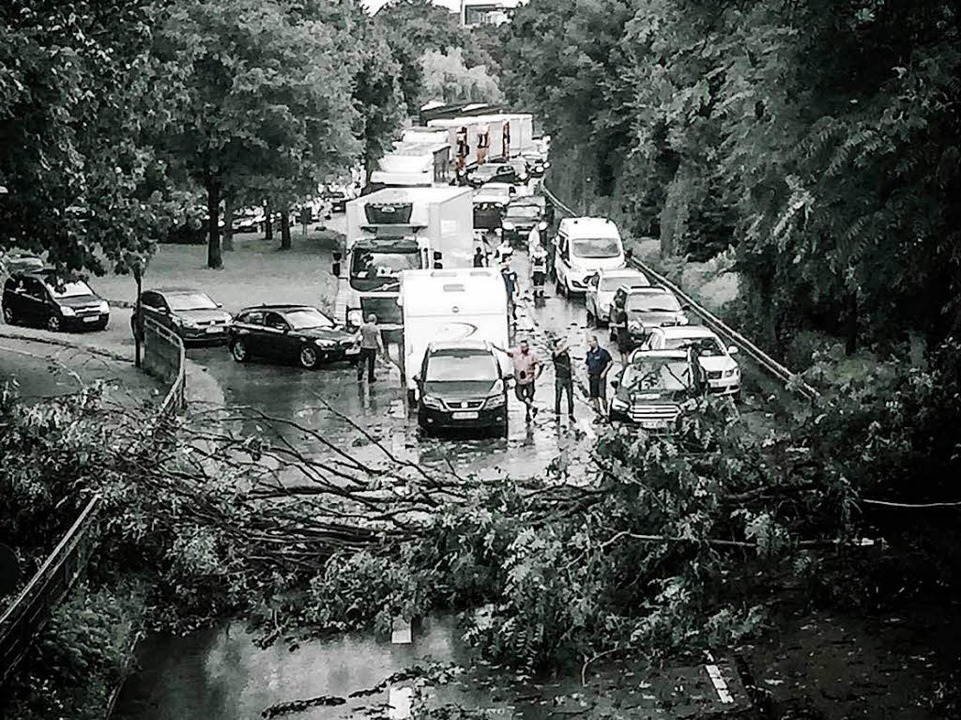 Ein Sturm hat einen Baum am Zubringer-Mitte entwurzelt.  | Foto: Klaus Polkwoski