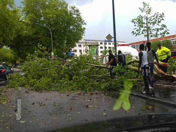 Unwetter in Freiburg: Ein großer Ast liegt auf der Lörracher Straße in Haslach.