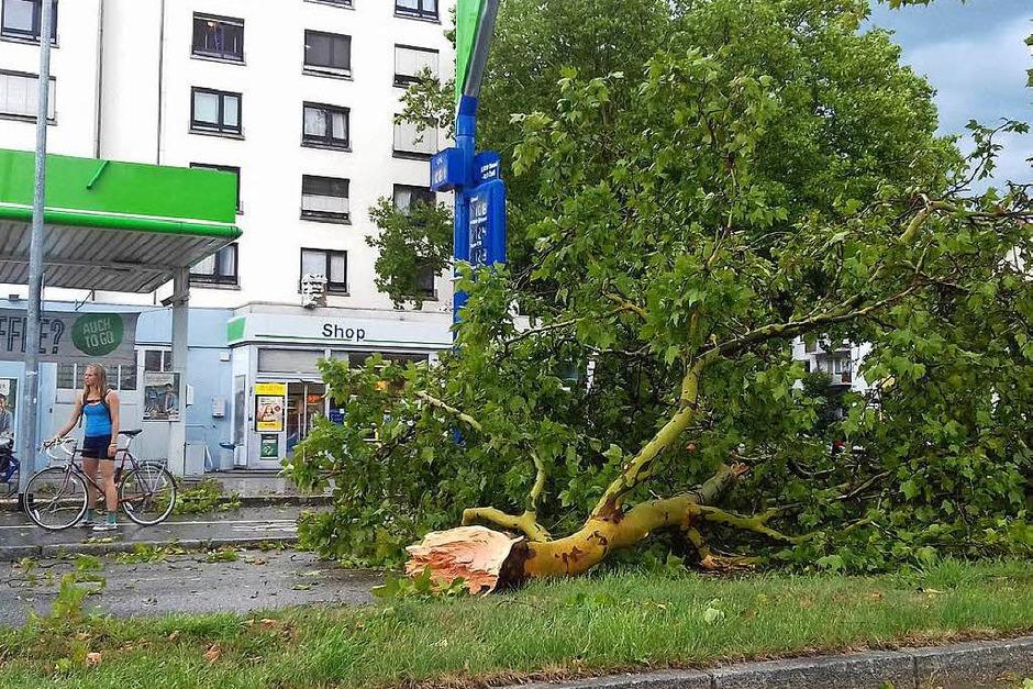 Unwetter in Freiburg: Ein großer Ast liegt auf der Eschholzstraße gegenüber der Schwarzwaldmilch. (Foto: Manuela Fräßle)