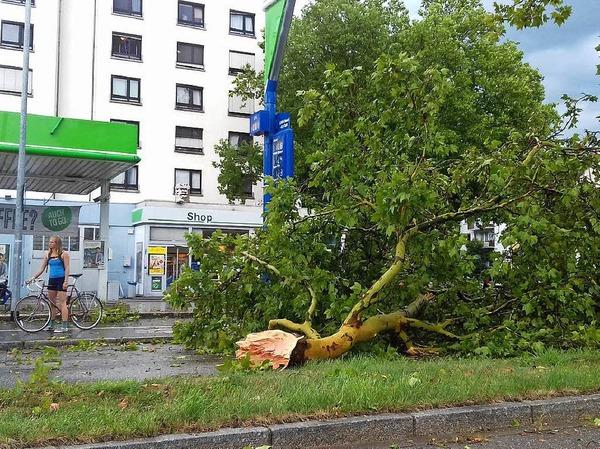 Unwetter in Freiburg: Ein großer Ast liegt auf der Eschholzstraße gegenüber der Schwarzwaldmilch.
