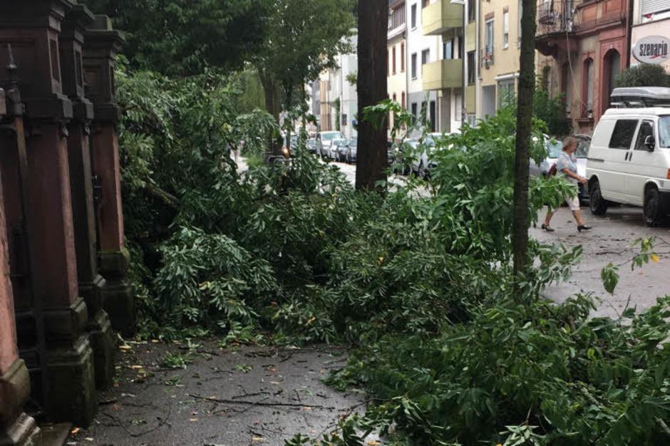 Ein kurzes und heftiges Unwetter hat in Freiburg Bäume entwurzelt und Menschen die Sicht genommen. (Foto: Alexandra Röderer)