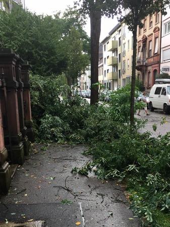 Ein kurzes und heftiges Unwetter hat in Freiburg Bäume entwurzelt und Menschen die Sicht genommen.