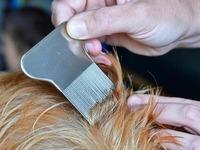 Tipps: Wie Eltern Kopfläuse bei Kindern vermeiden können