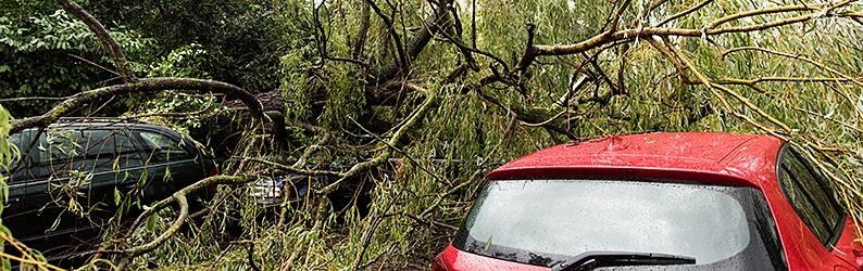 Unwetter über Freiburg: Bäume stürzen um - Kran knickt ab - 215 Einsätze der Feuerwehr