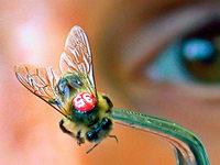 Suche nach den Gründen fürs Insektensterben