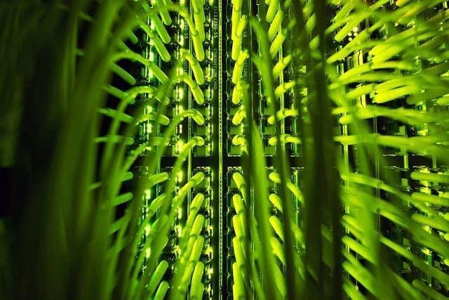Wollen die Kandidaten im Wahlkreis Lörrach-Müllheim den Ausbau digitaler Infrastruktur?