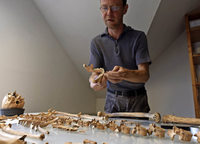Der Anthropologe Sönke Bohnet wertet Sklelettfunde vom Münsterplatz aus