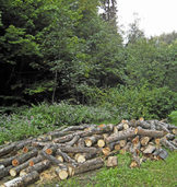 Wald wirft einen satten Gewinn ab