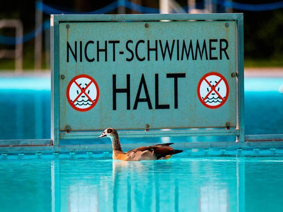 Sie kann beruhigt weiterschwimmen: Nil...mmer-Becken eines Frankfurter Freibads  | Foto: dpa