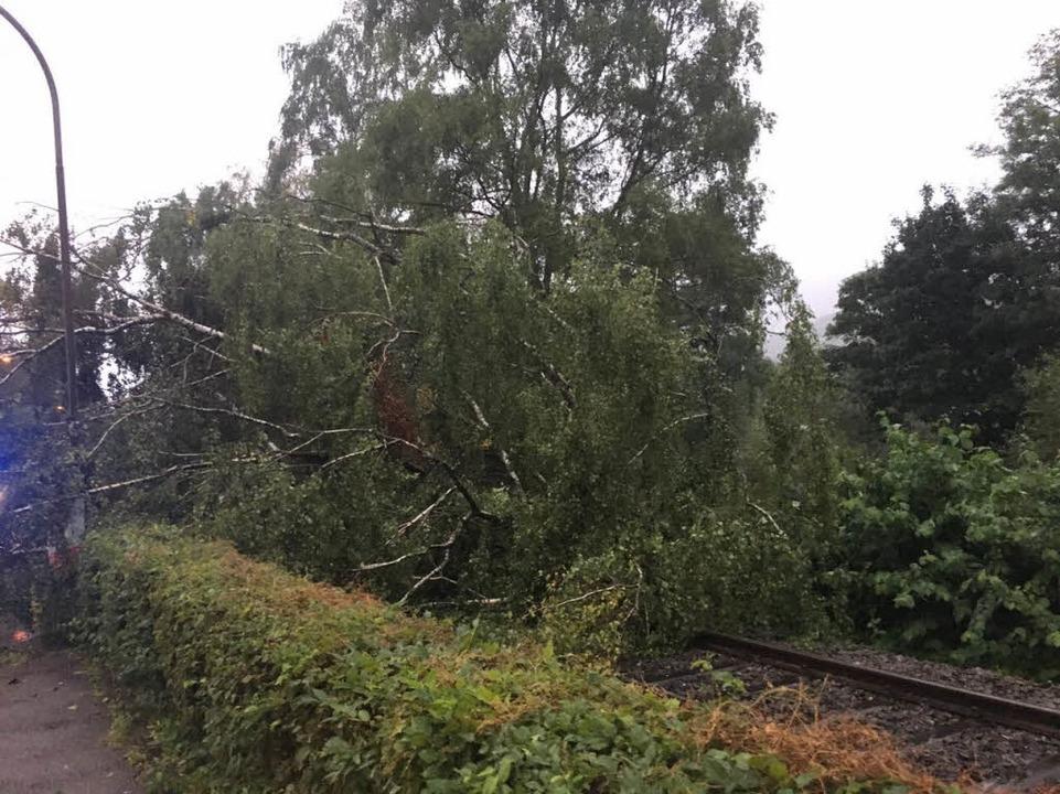 Ein Baum blockierte etwa eine Stunde l... und die Elztalbahnlinie in Waldkirch.  | Foto: Feuerwehr Waldkirch