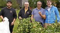Oberrieder Hopfen fürs neue Dreisambier