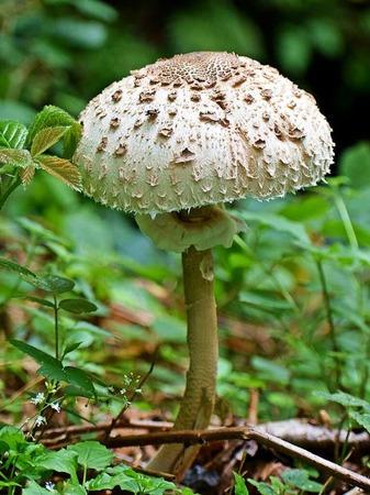 Ein Männlein steht im Walde (Murgtalpfad bei Hottingen)