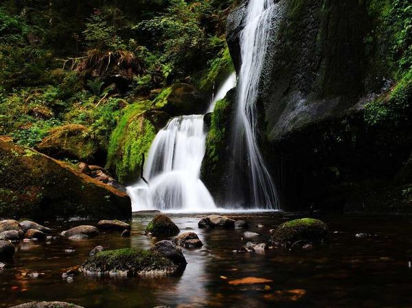 Ein Gedicht der Natur (Trieberg)