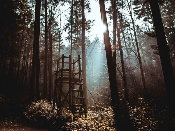 lost in the woods (Waldsee Freiburg)