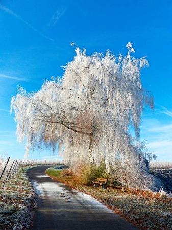 Märchenhafter Rebpfad an frostig-klarem Wintermorgen (Tuniberg)
