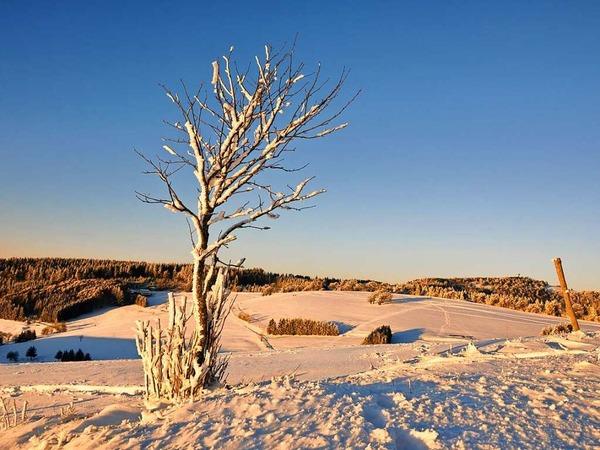 Winter auf'm Schauinsland (Schauinsland)