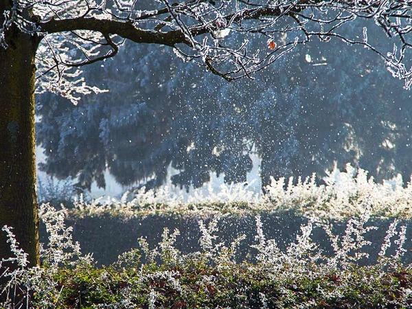 Magische Schneeflocken (Kirchhofen)