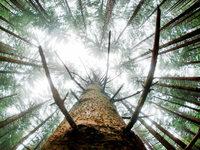 Das Leiden der Fichte: So setzt der Klimawandel dem Wald zu
