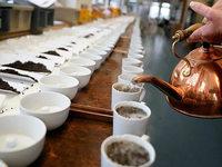 Schlechte Nachricht für Teefreunde: Darjeeling wird knapp