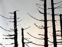 Sterben Bäume ?
