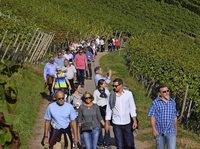 Weinwanderung in Waldkirch