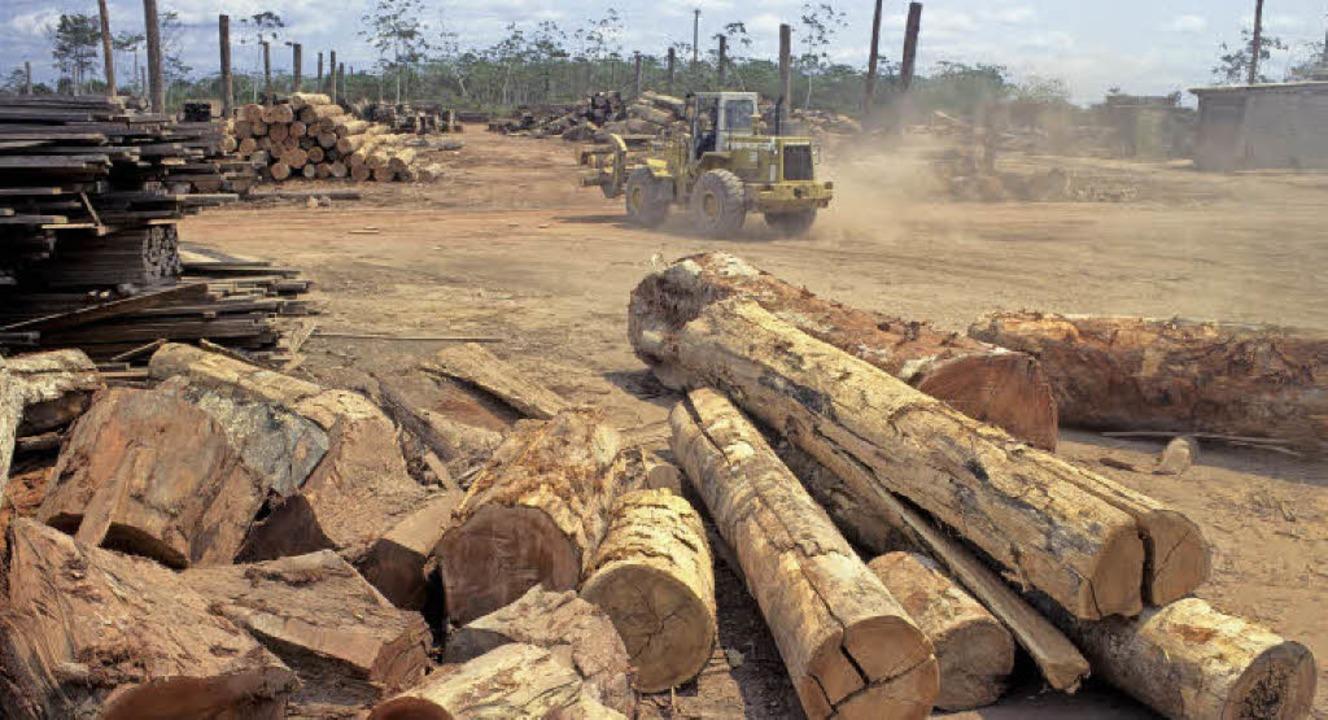 Raubbau im Urwald des brasilianischen ...zerstört die Lebensgebiete von Indios.  | Foto: dpa/AFP