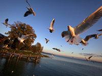Zur Erntezeit lohnt ein Besuch am Bodensee