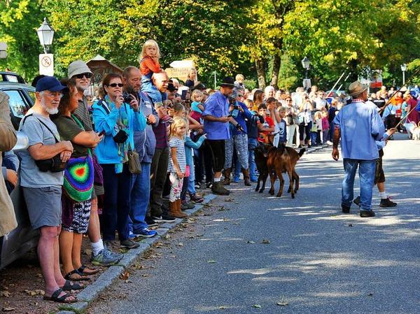 Ein buntes Bild bot sich den vielen Zuschauern beim Almabtrieb am Sonntagvormittag.