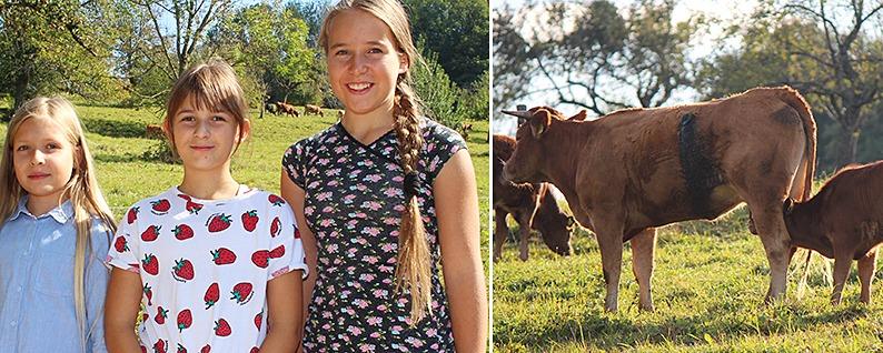 """Drei Mädchen aus Schopfheim-Wiechs retten die Kuh """"Mango"""""""