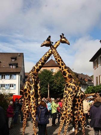 Fabelhafte und bezaubernde Fantasiewesen schwebten wieder auf Stelzen durch die historische Innenstadt Staufens und brachten die zahlreichen Besucher zum Gaffen, Staunen und Dahinschmelzen.