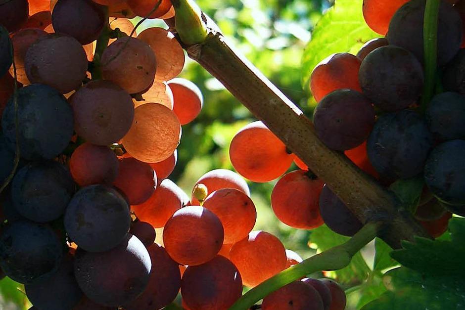 Kategorie Food: Traubenblut mach frohen Mut (Lahr) (Foto: Harry Herzog)