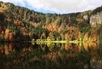 Fotos: So bunt ist der Herbst im Hochschwarzwald