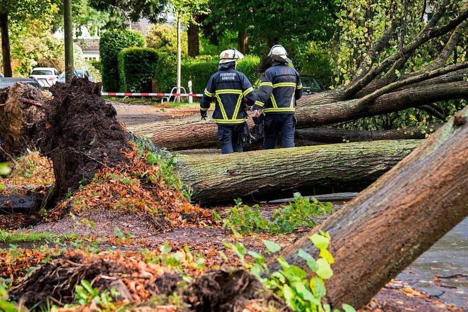 In Hamburg fällt Sturmtief Xavier etliche Bäume. (Foto: dpa)
