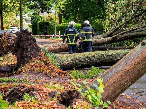 In Hamburg fällt Sturmtief Xavier etliche Bäume.