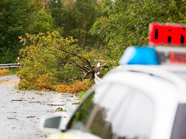 An einer Auffahrt zur Autobahn A29 bei Rastede (Niedersachsen) ist ein Baum auf die Fahrbahn gestürzt.