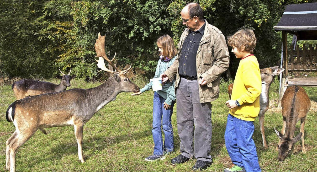 Die Tiere fressen den Menschen aus der...h um die Niederweiler Hirsche kümmert.  | Foto: Volker Münch