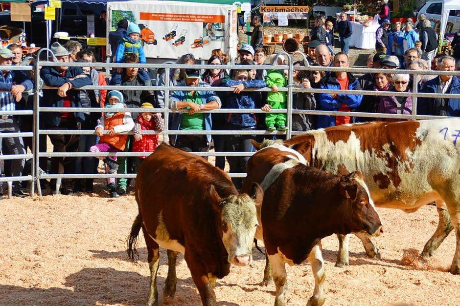 Neben der Viehversteigerung gab es beim Weideviehmarkt in Wies ein interessantes Rahmenprogramm (Foto: Edgar Steinfelder)