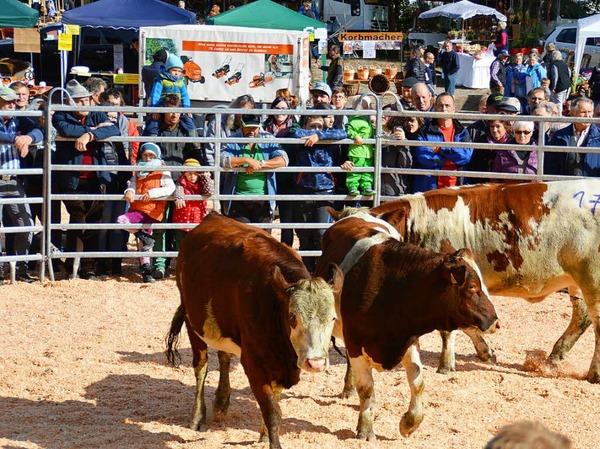 Neben der Viehversteigerung gab es beim Weideviehmarkt in Wies ein interessantes Rahmenprogramm