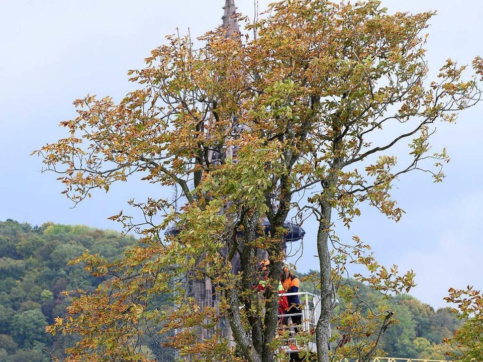 Die Holzfäller arbeiten am Schwarzen K...– mit Blick auf den Münsterturm.  | Foto: Ingo Schneider